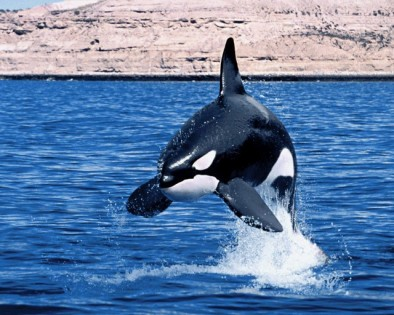 orca3.jpg